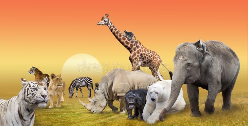 Colagem selvagem do grupo de animais do savana foto de stock