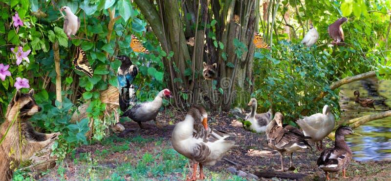 Colagem surreal de animais comuns na madeira fotografia de stock royalty free