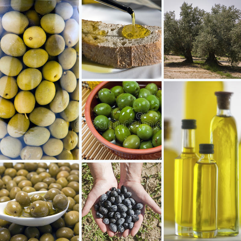 Colagem verde-oliva da colheita feita de sete imagens foto de stock