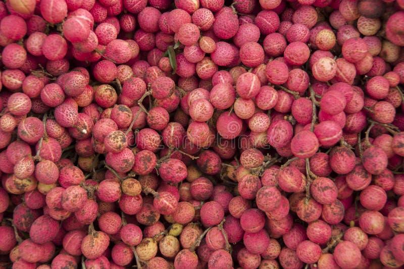 Colan Tajlandzka dzika owoc obrazy stock