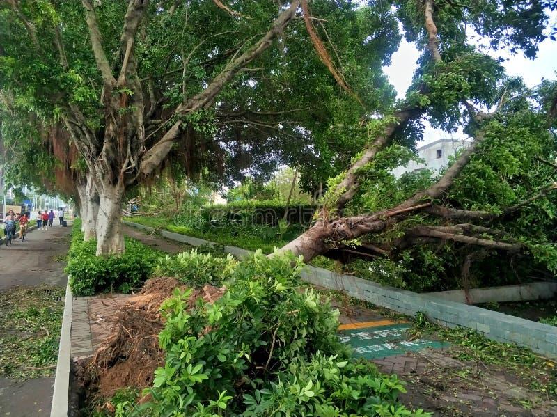 Colapso da árvore após o tufão fotos de stock