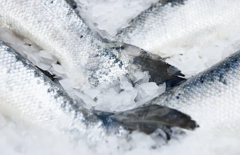Colas de color salmón en la visualización refrescada del mercado imágenes de archivo libres de regalías