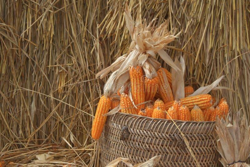Colas de maíz secas en una cesta tejida con heno en segundo plano foto de archivo libre de regalías