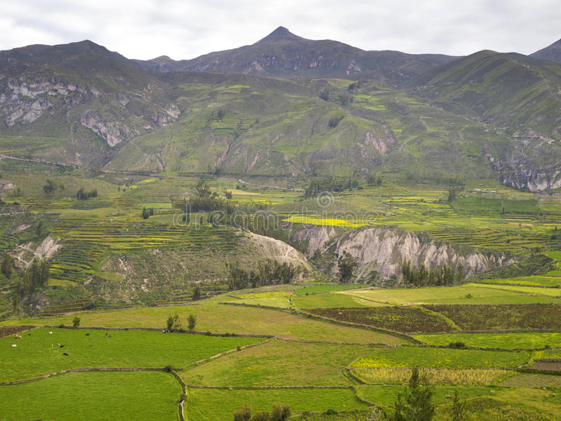 Colca canyon, Arequipa, Peru. Partial view of the Colca Canyon, Arequipa region, Peru stock photography