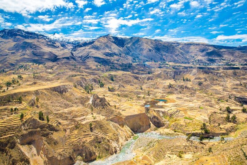 Colca jar, Peru, Ameryka Południowa.  Incas budować Uprawiać ziemię tarasy z stawem i falezą. obrazy stock