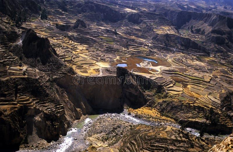 Colca Valey - terraço do Inca - Condors dirige #4 fotos de stock royalty free