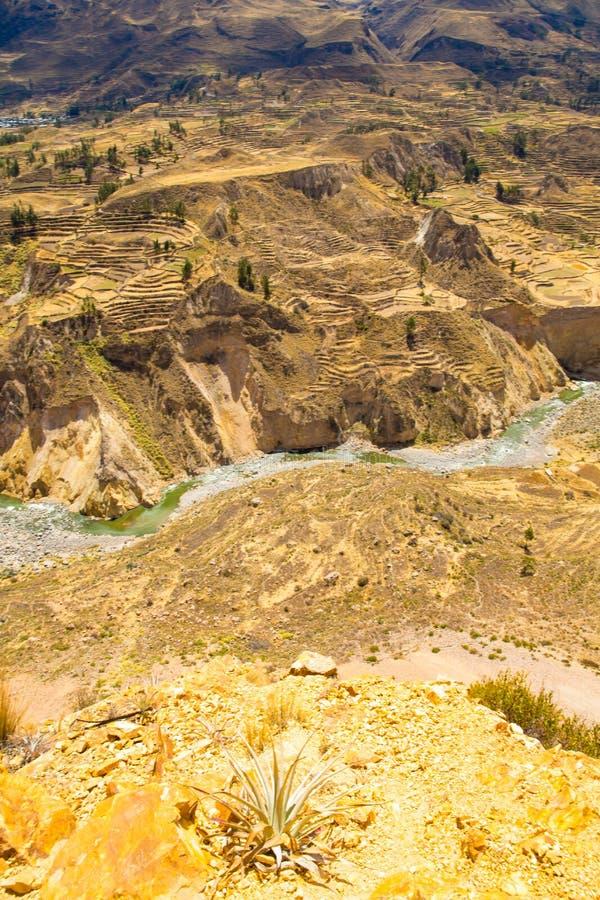 Colcacanion, Peru, Zuid-Amerika Incas om de Landbouwterrassen met Vijver en Klip te bouwen Één van diepste canions in wereld stock foto's