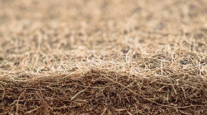 Colchão com fibra de coco Fibra de coco do coco Shell raspado do coco para a produção de colchões Textura, fundo natural foto de stock royalty free