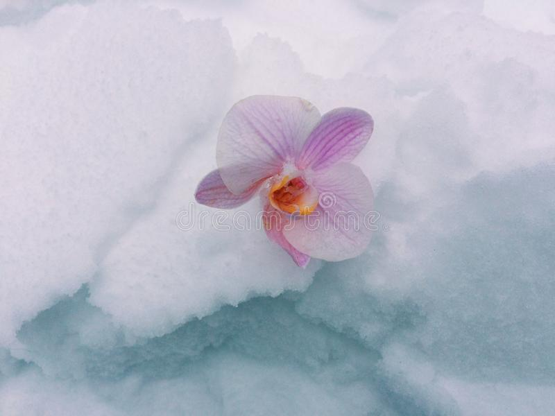Cold beauty stock image