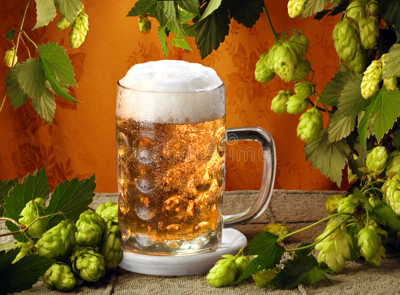 Download Cold beer and hops stock photo. Image of green, food, glass - 6583326