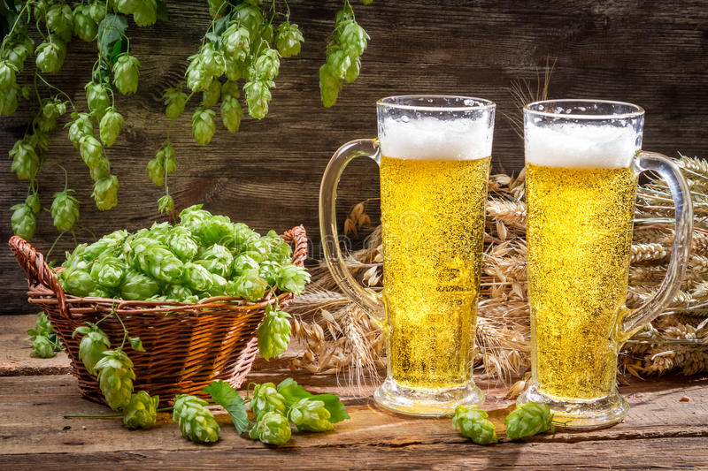 Cold beer surrounded by hops cones royalty free stock photography