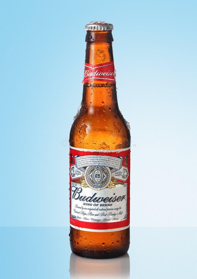 Cold bottle of budweiser beer. Cold budweiser beer bottle on blue background stock images