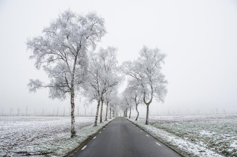 Cold, Countryside, Dawn stock photos
