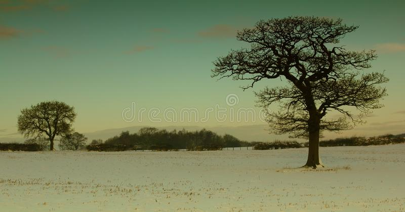 Cold, Covered, Field stock image