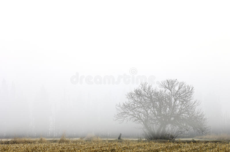 Cold dawn stock images