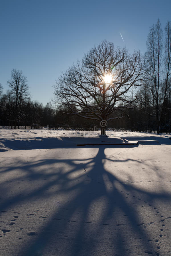 Download Cold Day Stock Photo - Image: 29219440