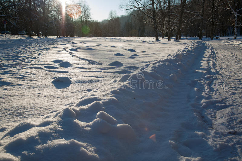 Download Cold day stock image. Image of white, january, photography - 29219489