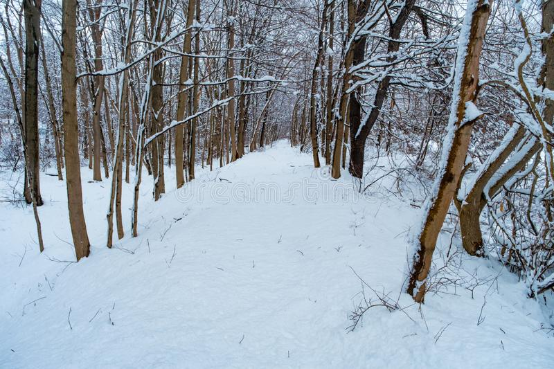 Snowy Hiking Trail Winter royalty free stock images