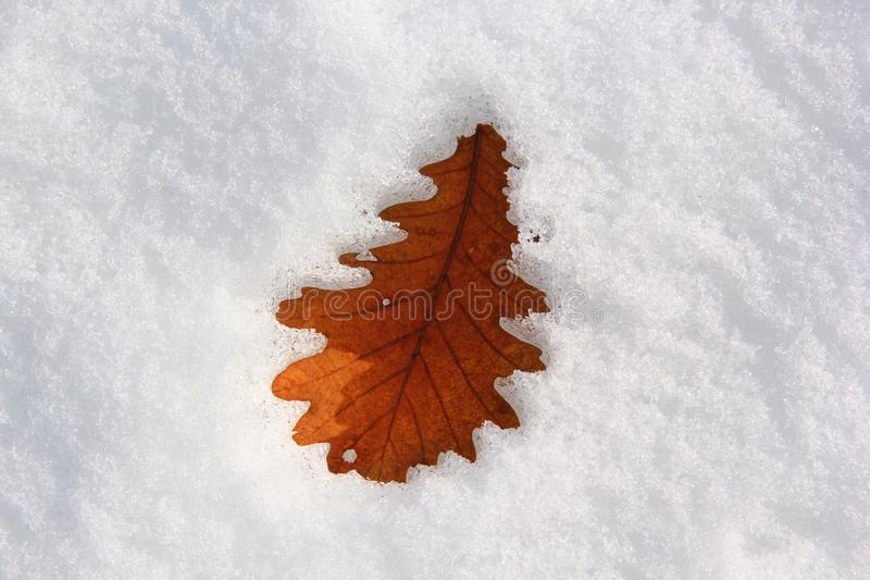 Cold leaf royalty free stock images