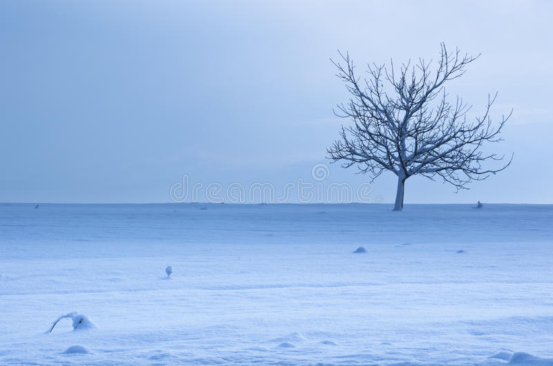 Cold Lone Tree. Winter landscape stock image
