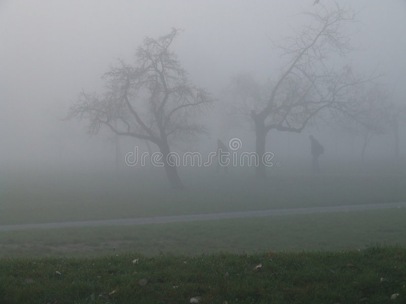 Download Cold morning stock image. Image of fall, early, foggy, detail - 340301
