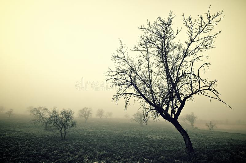 Cold morning royalty free stock photography