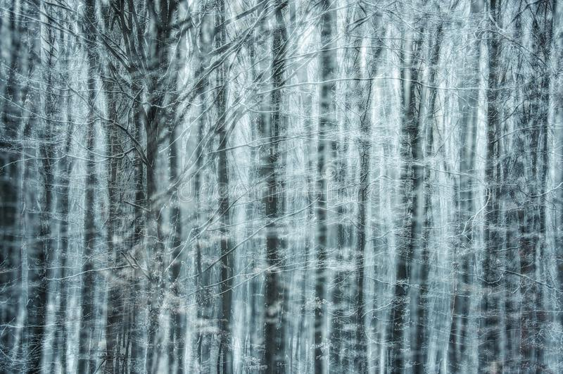Cold morning fairy-tale. A dreamlike cold winter scene in the forest, with branches in frost stock images