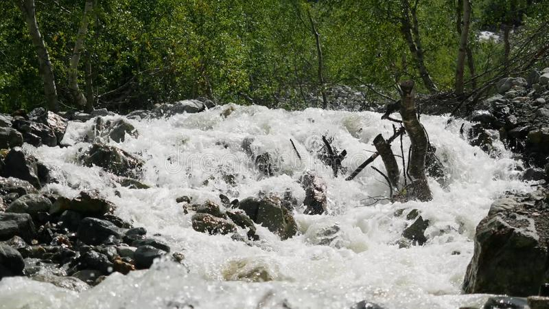 Cold mountain river with raging stream. View of the raging river in the forest stock image