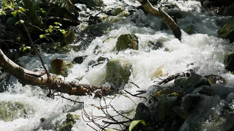 Cold mountain river with raging stream. View of the raging river in the forest stock images