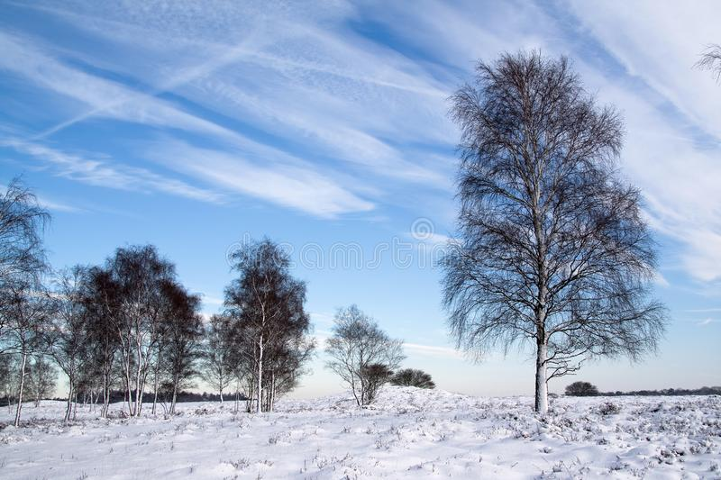 A snowy winter in Holland. royalty free stock photo