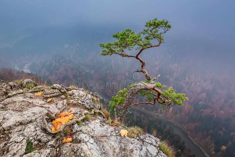 Cold Sokolica peak in Pieniny mountains at sunrise in Poland. Europe royalty free stock photo