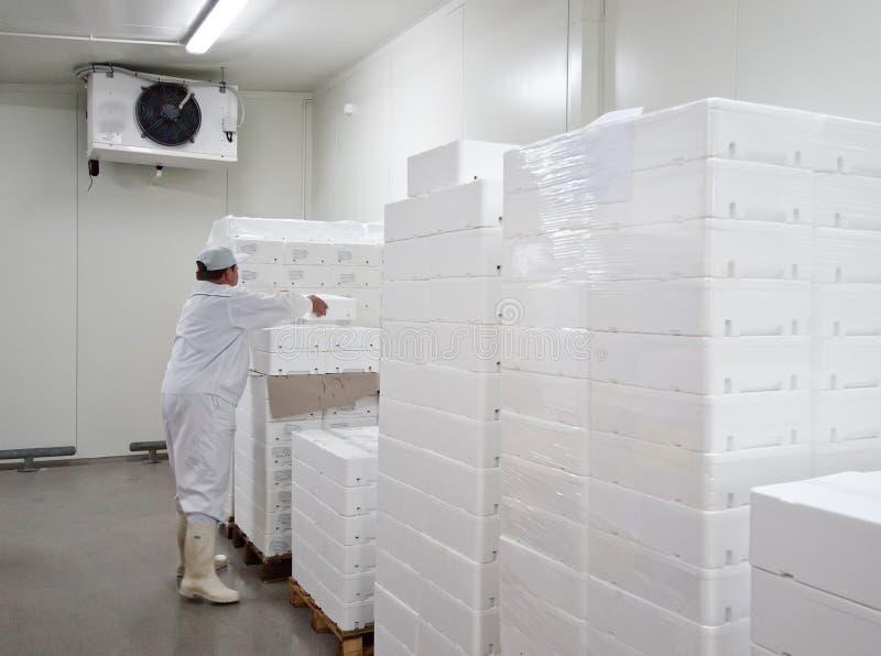 Cold storage. Worker, arranging polystyrene transport boxes for fresh food stock image
