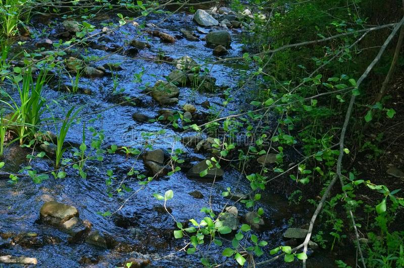 Cold Stream in Springtime. Cold Stream, rarely a babbling brook, with water flowing to make a rich sound in spring, at Cuyamaca State Park royalty free stock image