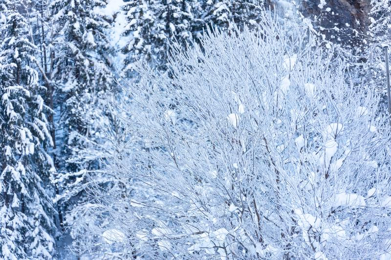 The Cold Switzerland`s Forest Winter Tree stock photo