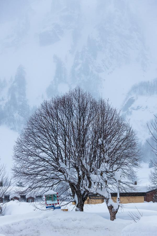 The Cold Switzerland`s Forest Winter Tree royalty free stock photos