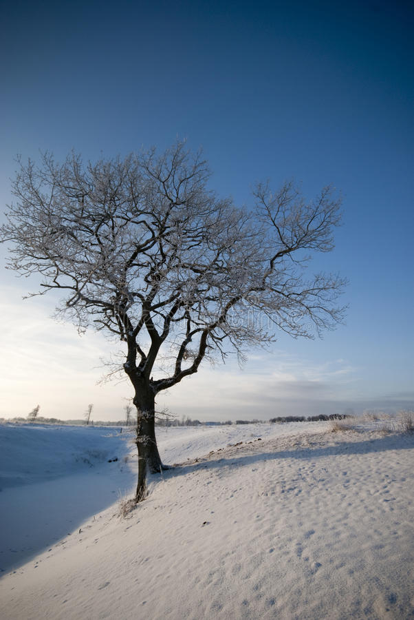 Cold Tree stock photography