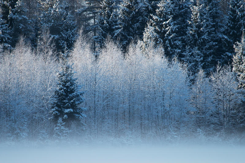 Cold weather in Estonia. Really cold weather in Estonia stock photography