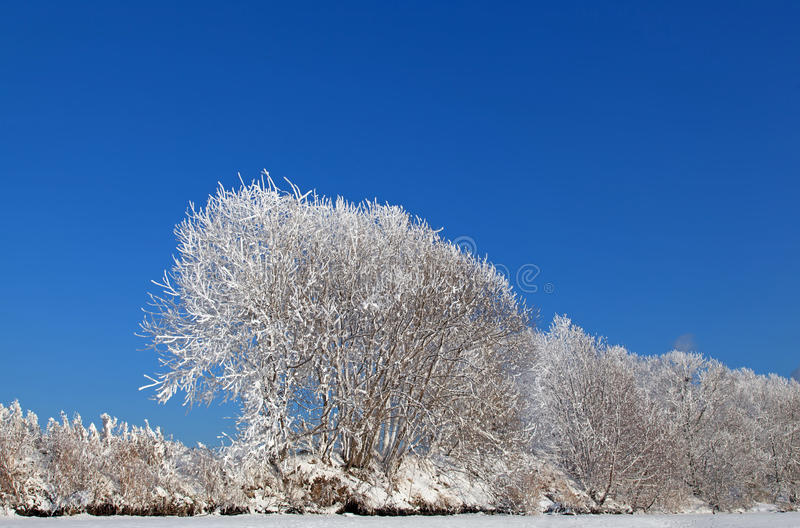 Download Cold Winter Stock Photo - Image: 25763580