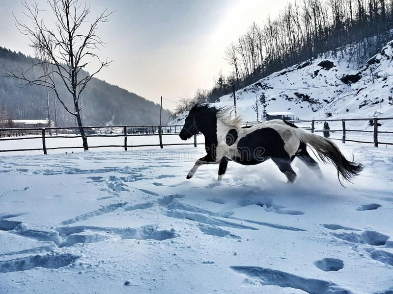 Cold winter beautiful wiew horse royalty free stock image