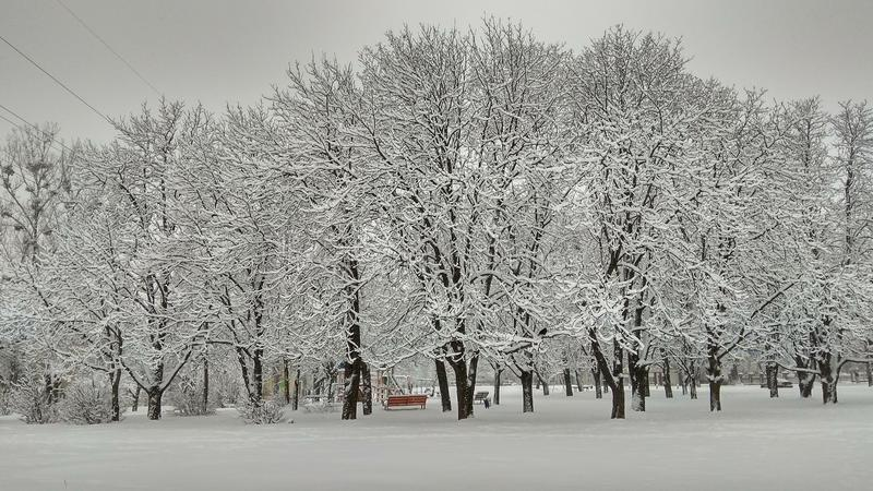 Cold winter city park in mist with snow covered tree trunks royalty free stock images