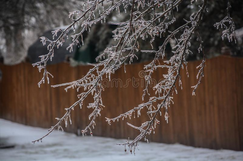 Cold Winter Coating on the Branch royalty free stock photo