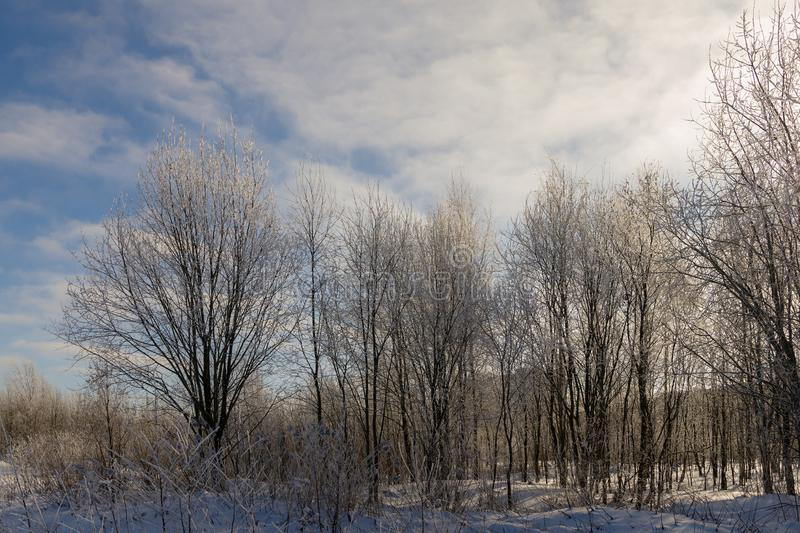 Cold winter day. Sunny landscape on a cold winter day royalty free stock images