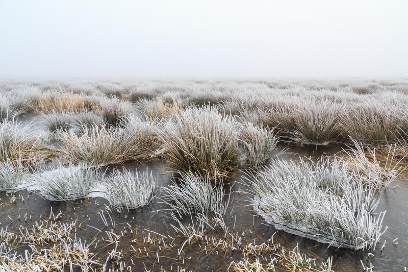 Cold Winter landscape of wetlands with mist and hoar frost. In Holland stock image