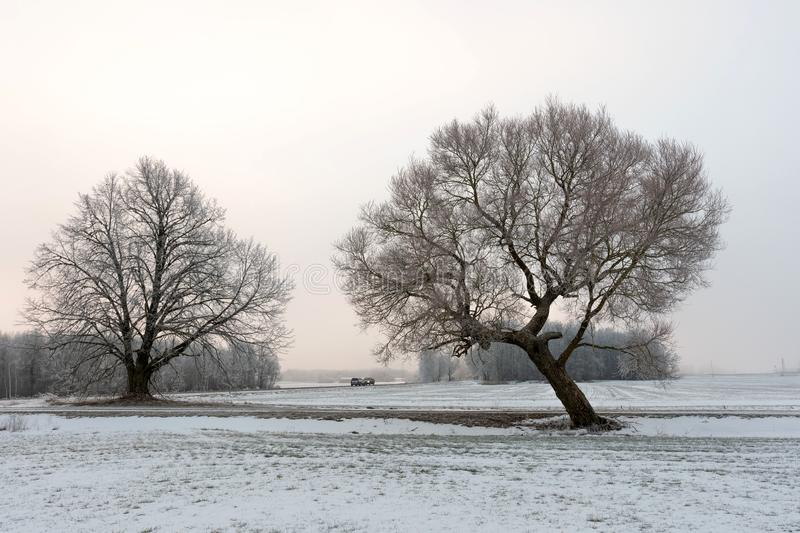 Cold winter morning landscape with a road and lonely tree stock photo