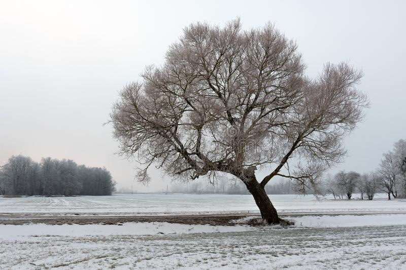 Cold winter morning landscape with a road and lonely tree stock images