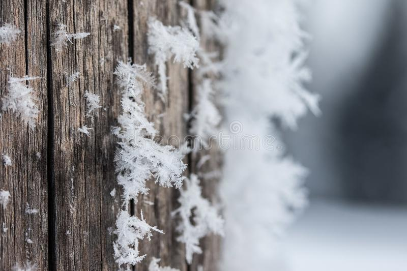 Cold winter season: Close up of a snowflake on a timber needle. Close up of ice crystal or snowflake on a timber needle, winter, frosty, beautiful, cold stock photo