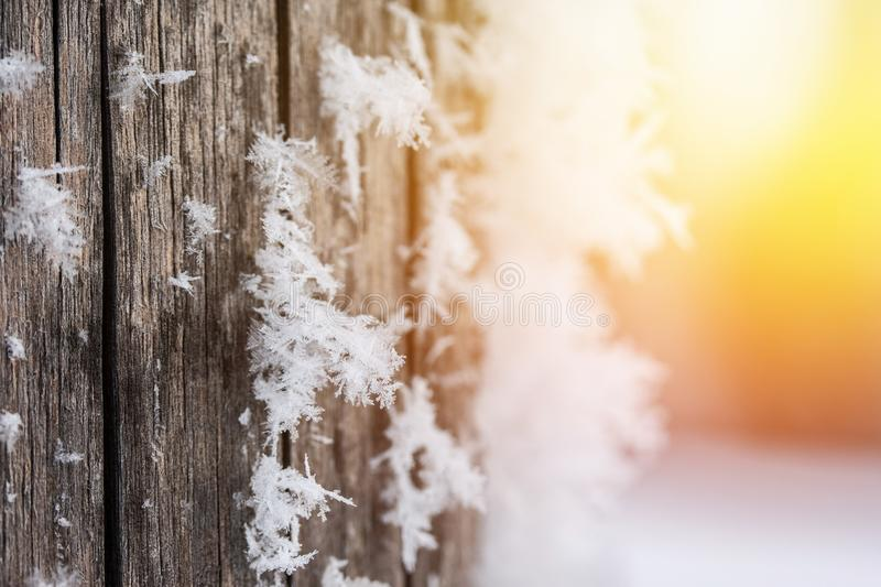 Cold winter season: Close up of a snowflake on a timber needle. Close up of ice crystal or snowflake on a timber needle, winter, frosty, beautiful, cold royalty free stock photography