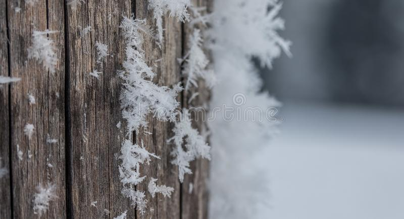 Cold winter season: Close up of a snowflake on a timber needle. Close up of ice crystal or snowflake on a timber needle, winter, frosty, beautiful, cold royalty free stock image