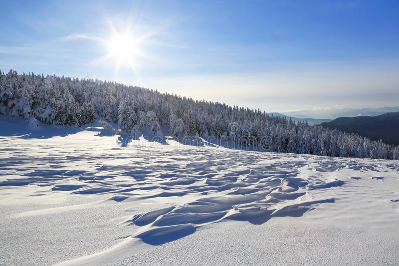 Cold winter sunny day. Mysterious, secret, fantastic, world of mountains. On the lawn covered with snow the nice trees. Cold winter sunny day. Mysterious stock photography