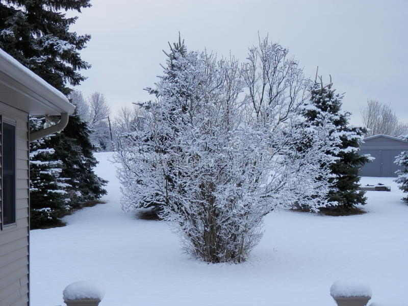 Cold wintry snowy day royalty free stock images
